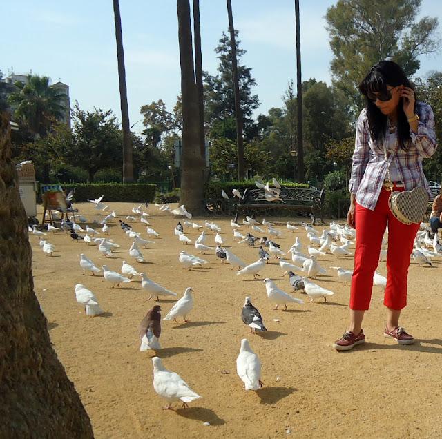 palomas-del-parque-de-maria-luisa