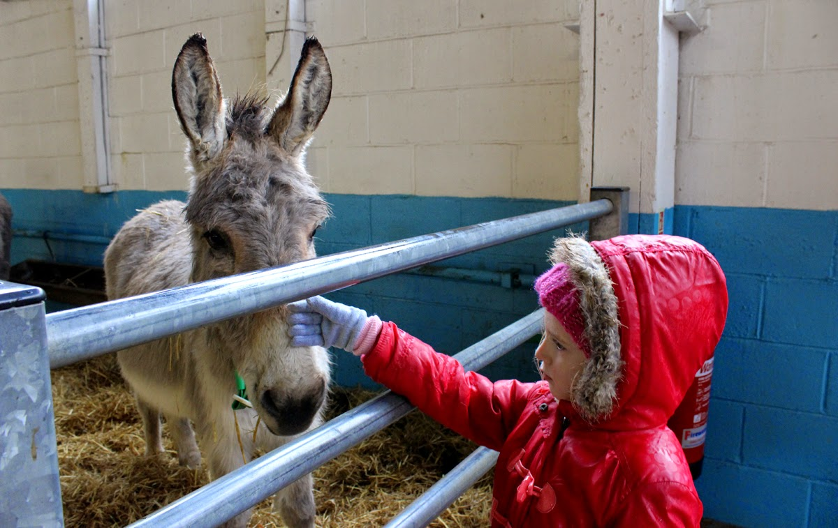 petting donkeys, countryside, donkey sanctuary, todaymyway.com
