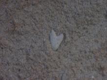 Naturlig hjerte i sanden... av korall