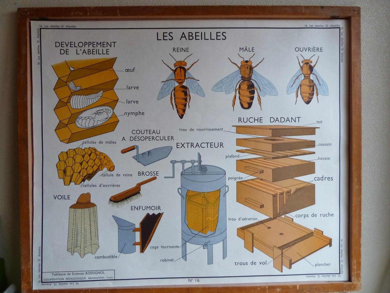 ecole fmr 1000 affiches scolaires serie la ferme affiches scolaires rossignol1960. Black Bedroom Furniture Sets. Home Design Ideas