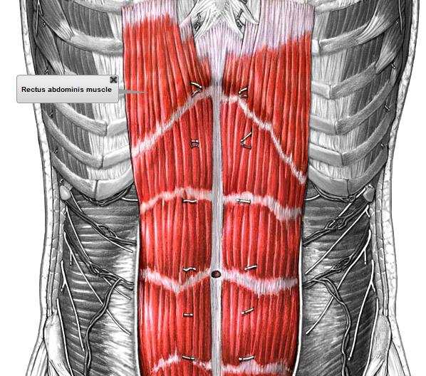 Respira: Recto abdominal