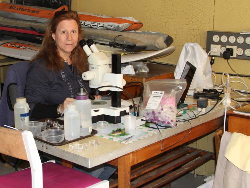 Leslie Harris and her microscope identifying marine worms at Vostok Marine Station in Russia