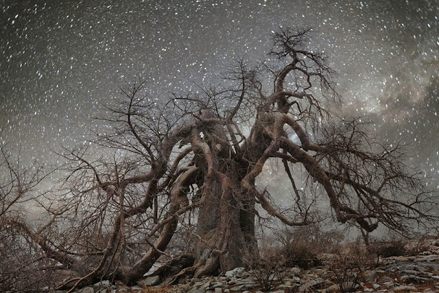 oldest trees beth moon diamond nights photography-11