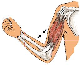 Tipo de articulaciones de nuestro cuerpo