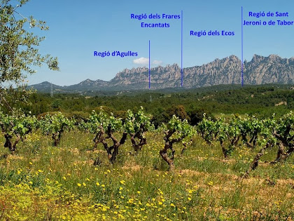 Vista de les vinyes i de les regions de Montserrat des dels Plans dels Hostalets