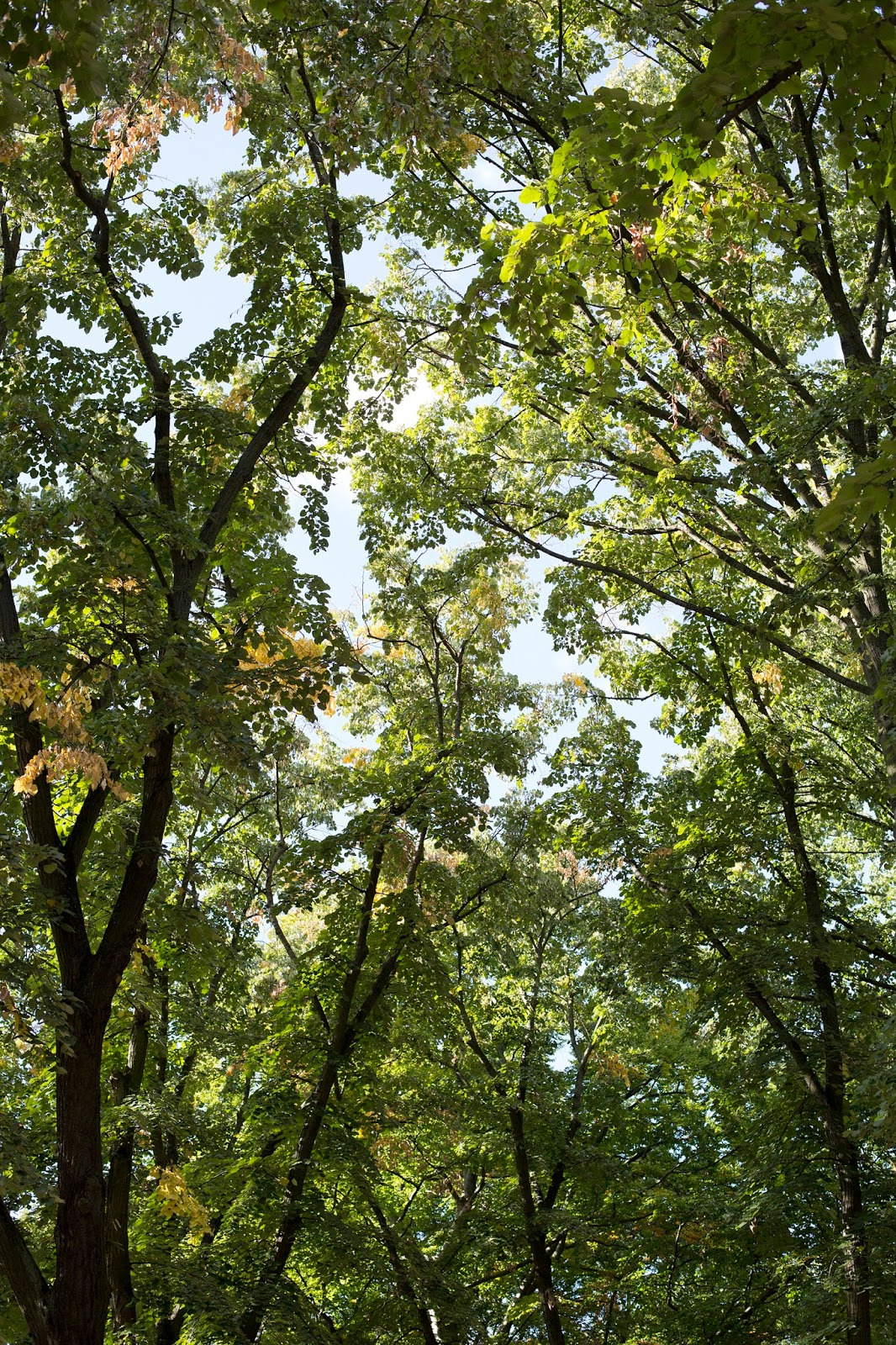Waldspaziergang im Herbst