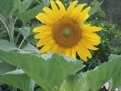 Love sunflowers