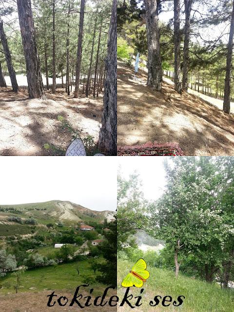 piknik-alanlari Ankara