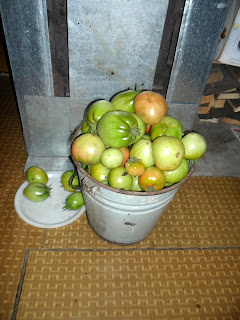 4 августа, ведро помидоров