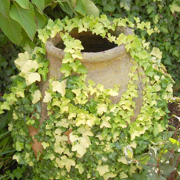 Plantas trepadoras para muros soleados guia de jardin for Jardines pequenos sin sol