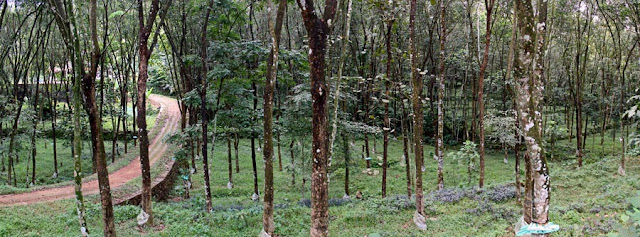 rubber plantations in Kerala