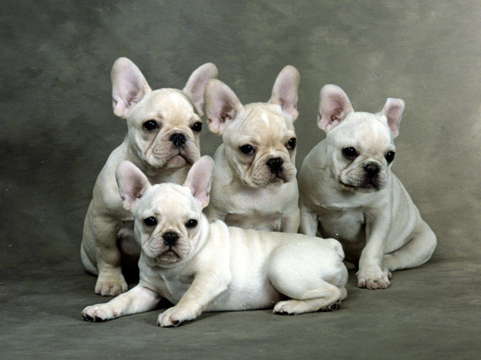 http://1.bp.blogspot.com/-3GlRg7bzgzo/UJIXIHeeyVI/AAAAAAAABIg/cPY794R3wMg/s1600/Puppies+Pictures+2.jpg