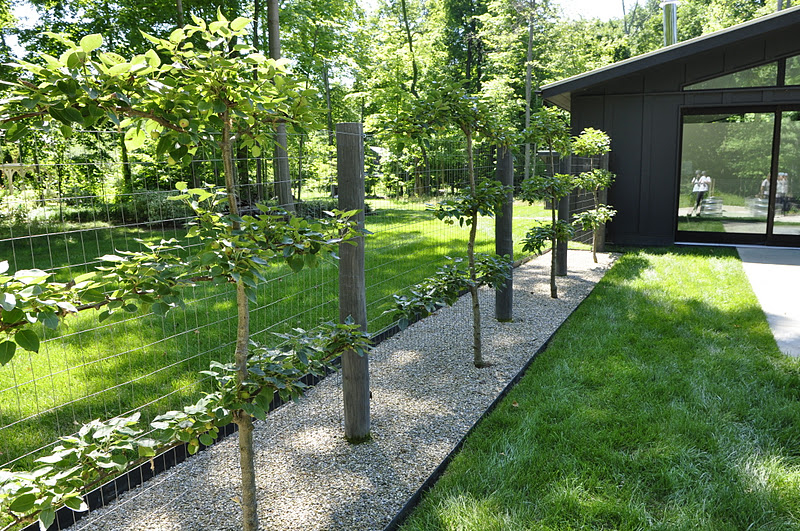 espalier asian pear trees on a clients property love the edging and rocks - Fruit Garden Design