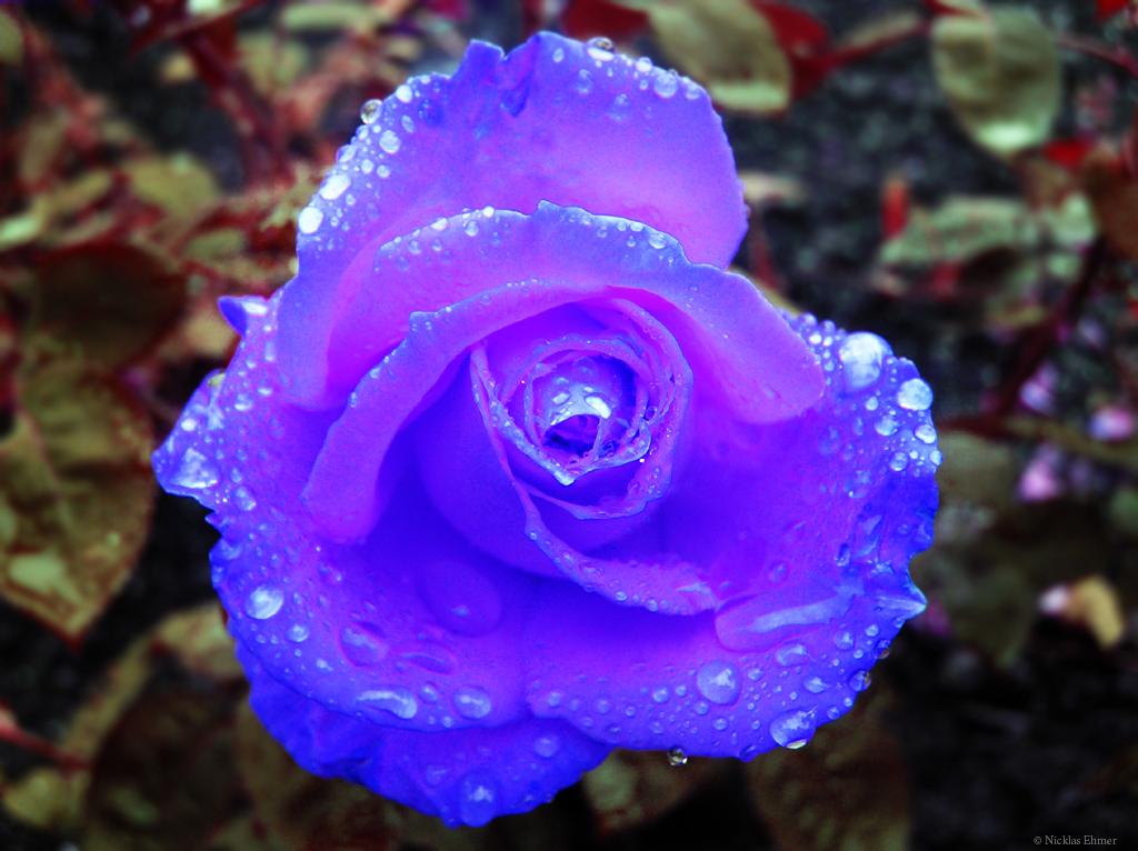 Avenger blog  Blue Ros...