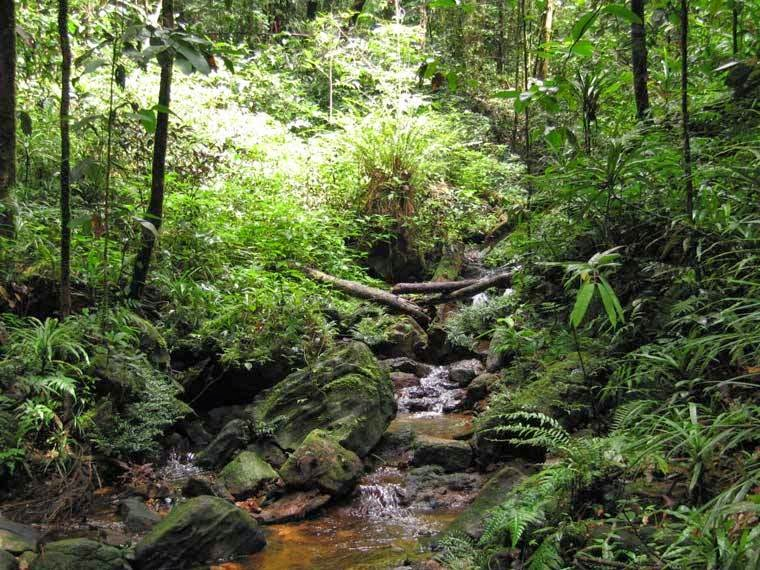 sinharaja rainforest essay