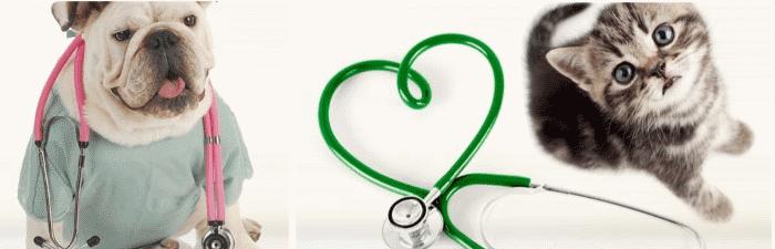 Cursos gratuitos de veterinária