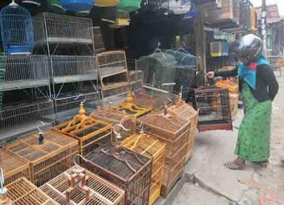 Sangkar Burung. Foto Haryadi/Pontianak Post