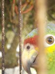 Parrot off the Beach, La Barra, Sontecomapan, Veracruz