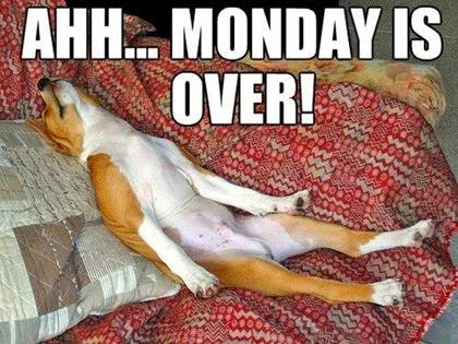 Ahh... Monday is over! dog meme