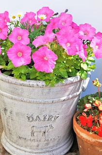 helen philipps flower pots. Black Bedroom Furniture Sets. Home Design Ideas