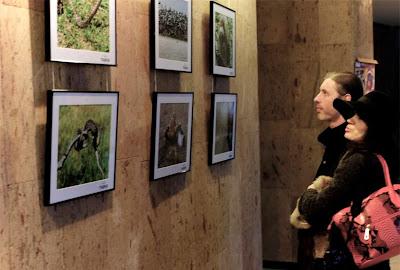 """Выставка """"Аскания нова..."""" вызвала живой интерес ценителей фото-искусства и природы"""