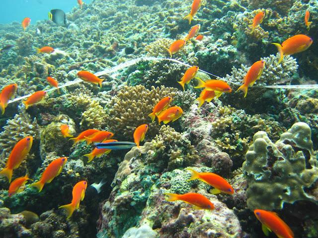 alam bawah laut