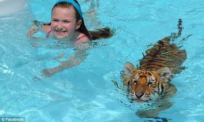 Berenang bersama harimau