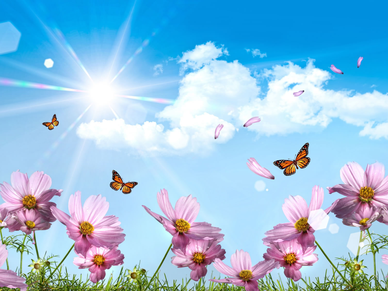 Blue sky desktop wallpaper and summer flowers that attract butterflies