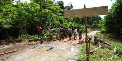 Kayu Paling Mahal di Papua