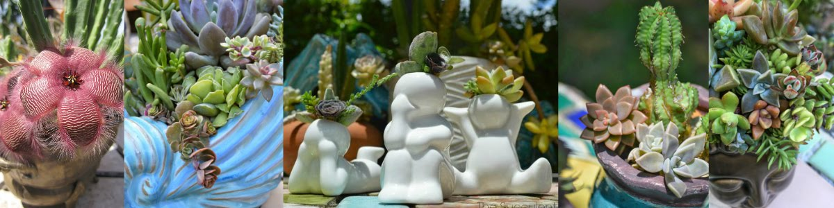 The Succulent Artist Collection:
