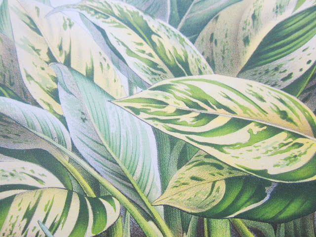 close up of leaves from English botanical prints from 1870s 