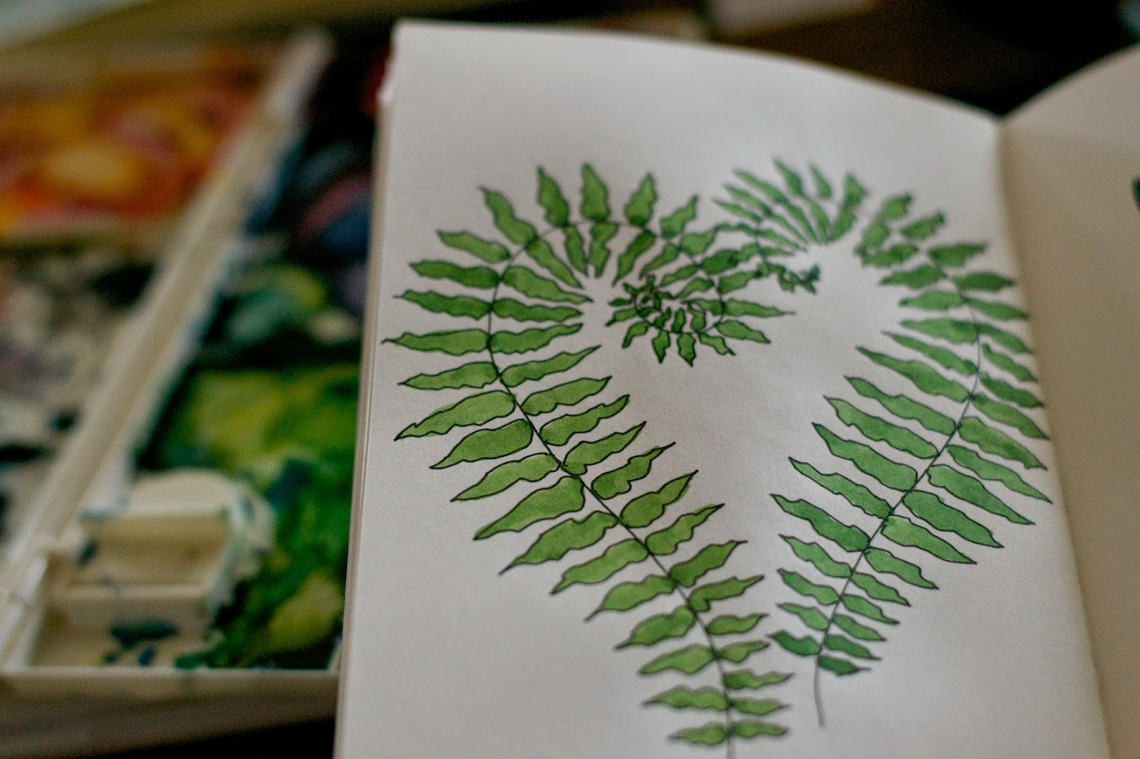 Sketchbook peek: Ferns unfurling.