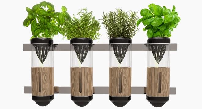 Especias y hierbas arom ticas en casa decoracion casas for Huerta de aromaticas en macetas
