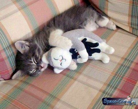 funny cute kitten nap