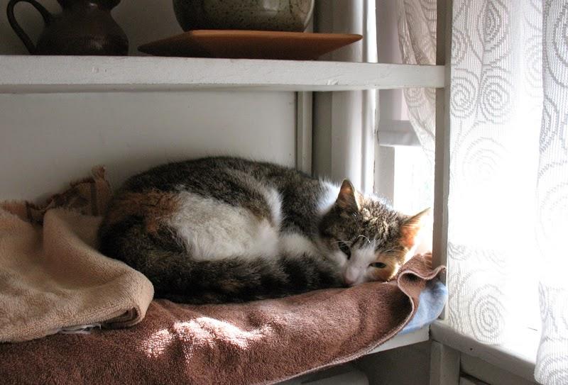 cat Maya