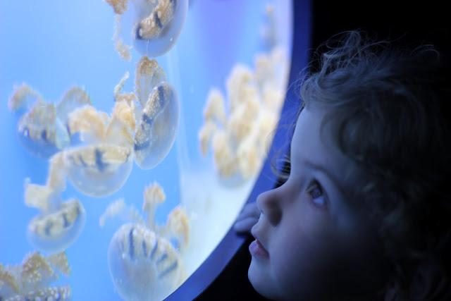 Jellyfish Birch Aquarium