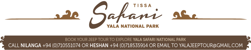 Yala Safari