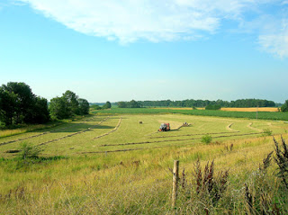 baling hay in a raked field