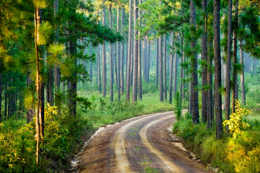 Longpine Plantation roadway