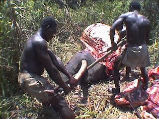 pembunuhan gajah