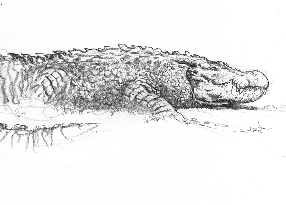 quickhidehere blogspot com let u0027s draw real life dragons