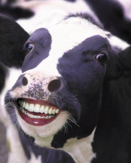 Sri lanka Funny images Sinhala jokes,Sri lankan gossip: funny cows