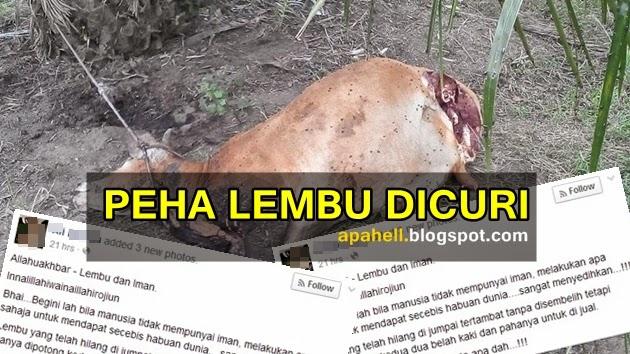 Peha Lembu Dicuri Disyaki Untuk DiJual (4 Gambar)