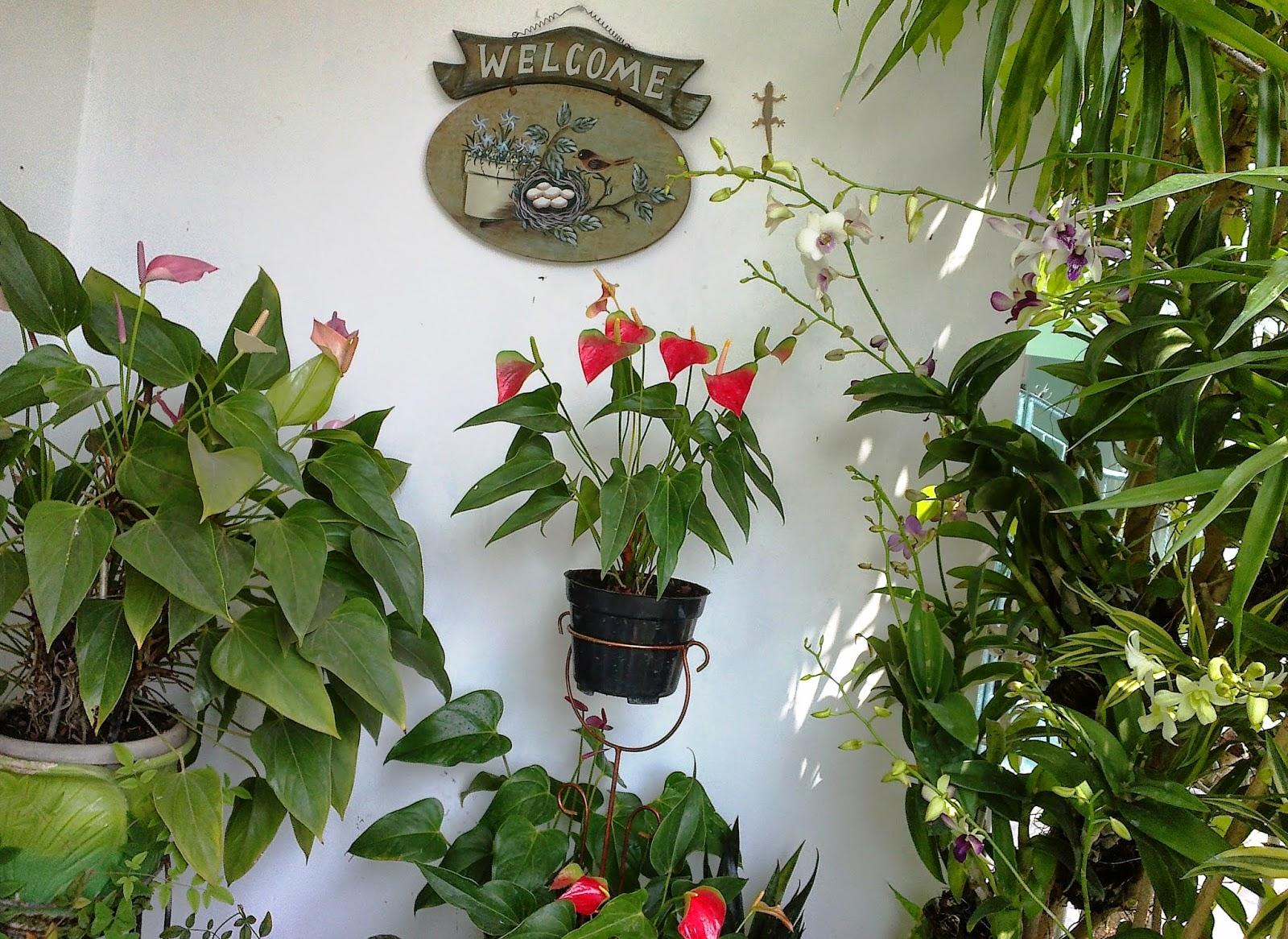 tanaman-hias-indoor