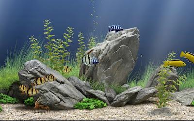 Летающие камни в аквариуме своими руками