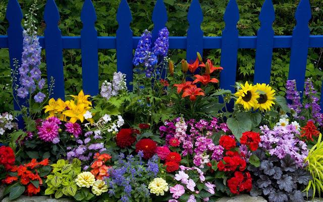 Cerca con Coloridas Flores - Imagen de Flores de Colores
