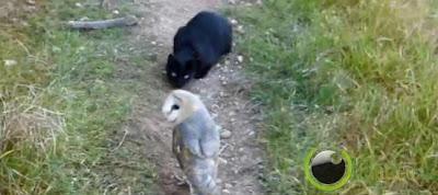 Pasangan Kucing Hitam Dan Burung Hantu