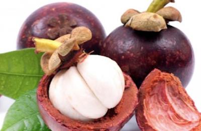 khasiat dan manfaat kulit buah manggis untuk kesehatan