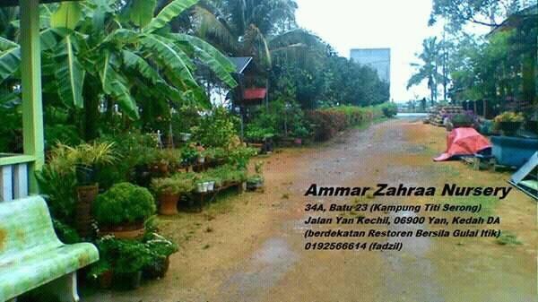 Ammar Zahraa Nursery