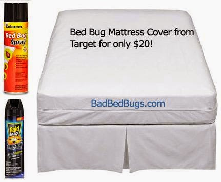 How To Kill Bedbugs Talk And Chats All About Life